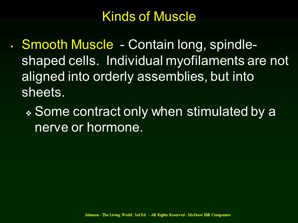 Johnson - The Living World: 3rd Ed. - All Rights Reserved - McGraw Hill Companies Kinds of Muscle Smooth Muscle - Contain long, spindle- shaped cells.