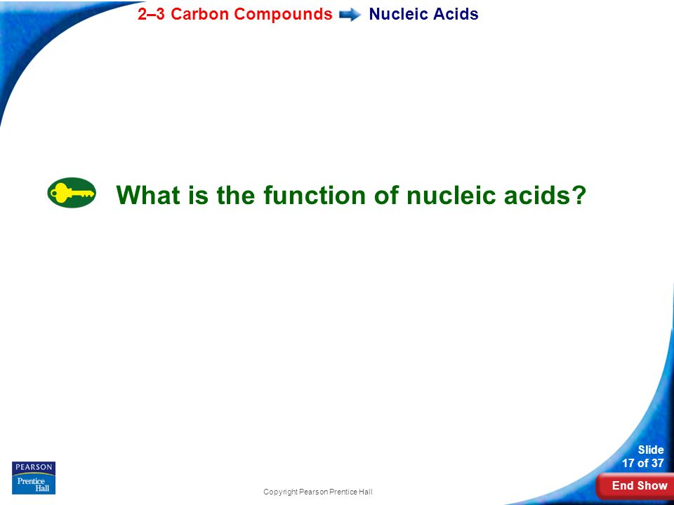 End Show 2–3 Carbon Compounds Slide 17 of 37 Copyright Pearson Prentice Hall Nucleic Acids What is the function of nucleic acids?