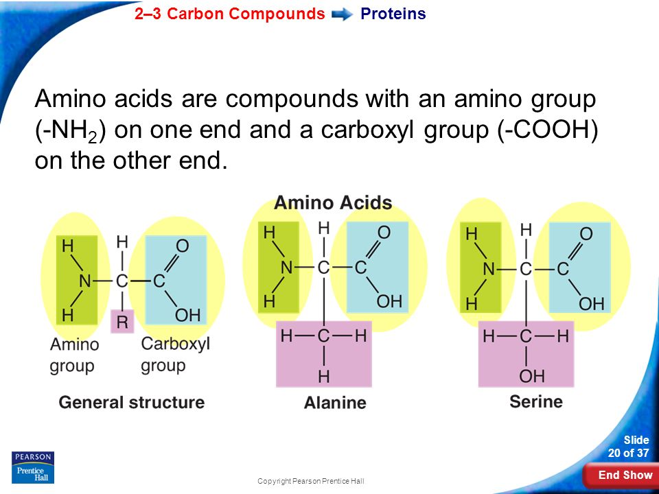 End Show 2–3 Carbon Compounds Slide 20 of 37 Copyright Pearson Prentice Hall Proteins Amino acids are compounds with an amino group (-NH 2 ) on one en