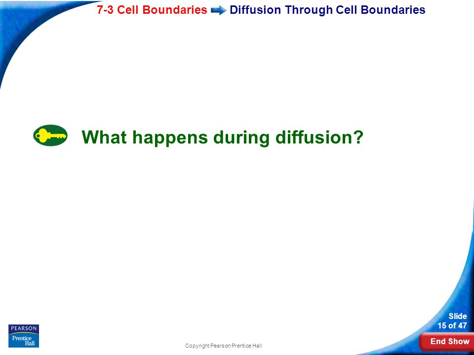 End Show 7-3 Cell Boundaries Slide 15 of 47 Copyright Pearson Prentice Hall Diffusion Through Cell Boundaries What happens during diffusion?