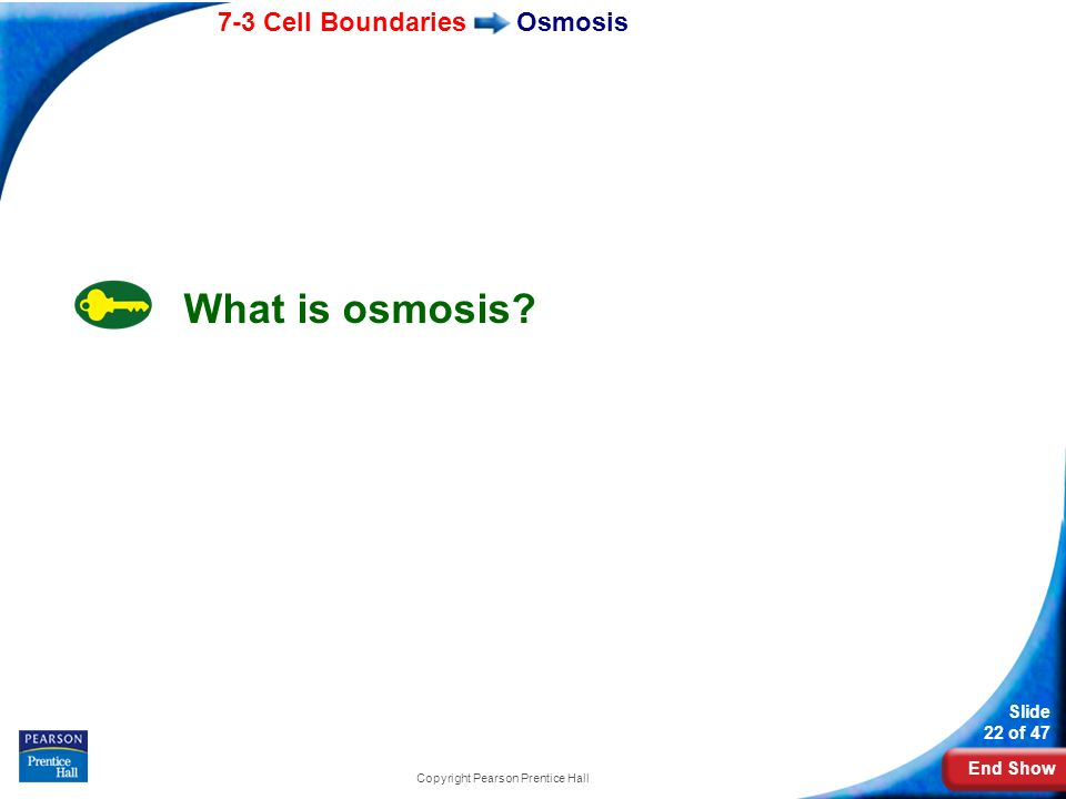 End Show 7-3 Cell Boundaries Slide 22 of 47 Copyright Pearson Prentice Hall Osmosis What is osmosis?