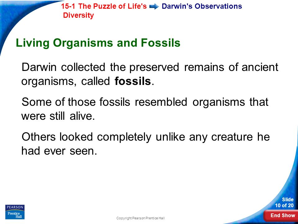 End Show 15-1 The Puzzle of Life's Diversity Slide 10 of 20 Copyright Pearson Prentice Hall Darwin's Observations Living Organisms and Fossils Darwin