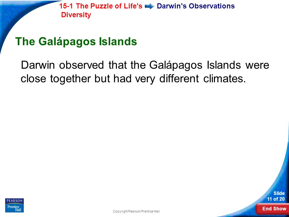 End Show 15-1 The Puzzle of Life's Diversity Slide 11 of 20 Copyright Pearson Prentice Hall Darwin's Observations The Galápagos Islands Darwin observe