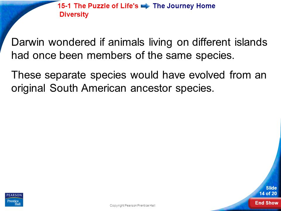 End Show 15-1 The Puzzle of Life's Diversity Slide 14 of 20 Copyright Pearson Prentice Hall The Journey Home Darwin wondered if animals living on diff