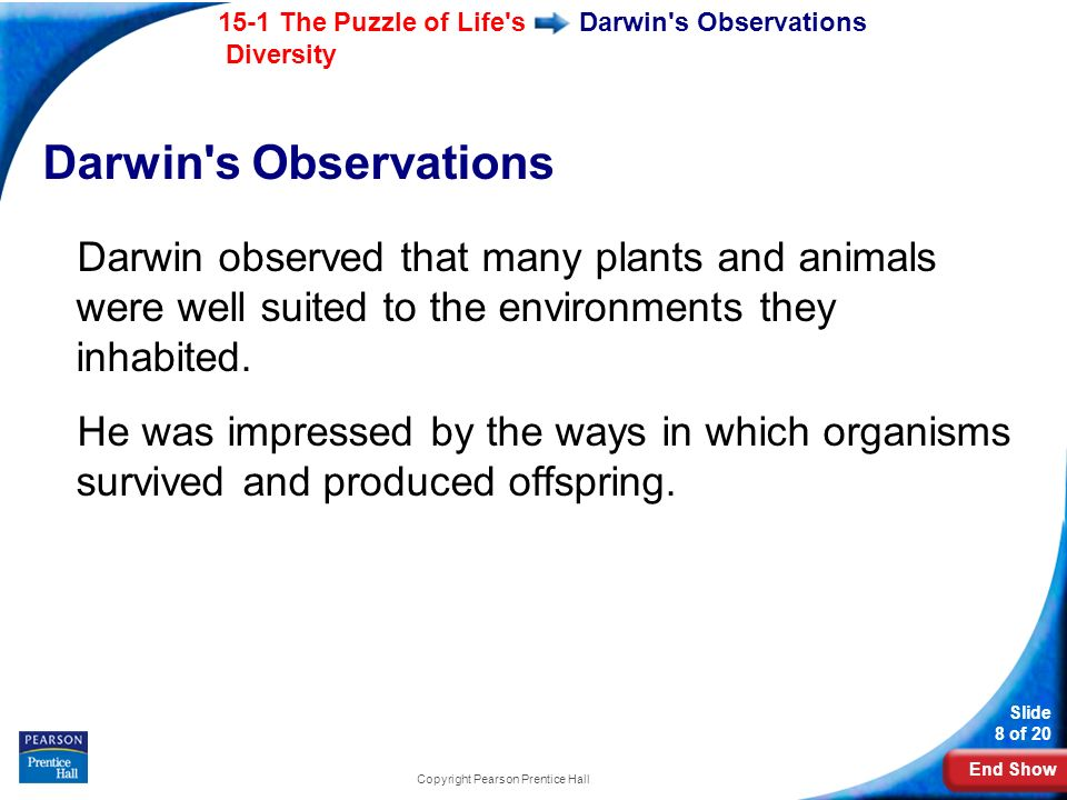 End Show 15-1 The Puzzle of Life's Diversity Slide 8 of 20 Copyright Pearson Prentice Hall Darwin's Observations Darwin observed that many plants and