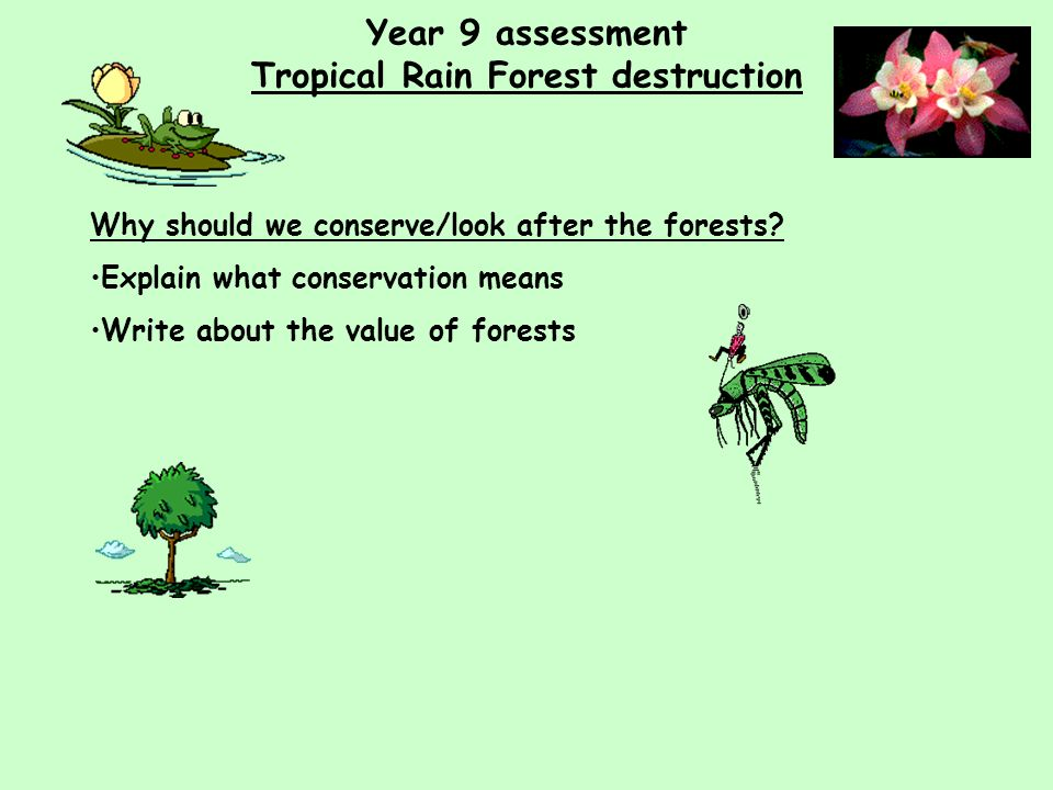 Year 9 assessment Tropical Rain Forest destruction Why should we conserve/look after the forests.