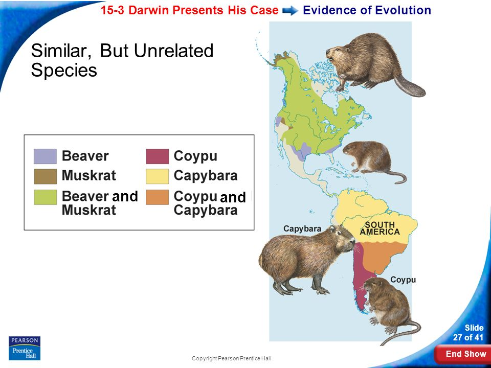 End Show 15-3 Darwin Presents His Case Slide 27 of 41 Copyright Pearson Prentice Hall Evidence of Evolution Similar, But Unrelated Species and