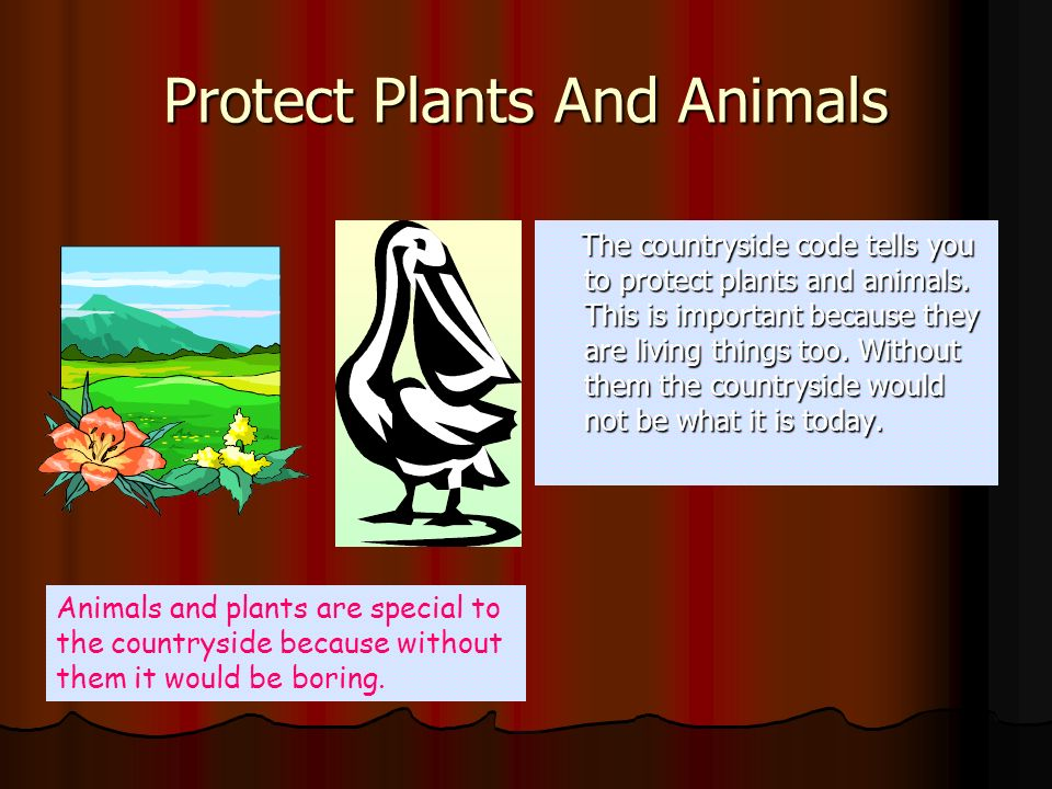 Protect Plants And Animals The countryside code tells you to protect plants and animals. This is important because they are living things too. Without