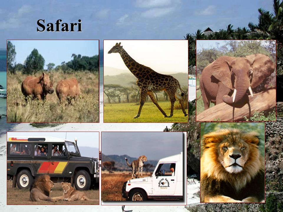 The Big 5 People go on safari to see the Big 5 – They are:People go on safari to see the Big 5 – They are: