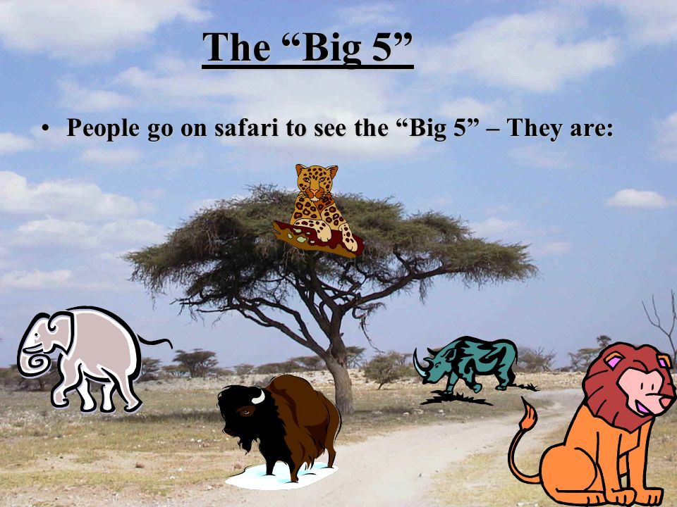 The Big 5 People go on safari to see the Big 5 – They are:People go on safari to see the Big 5 – They are: