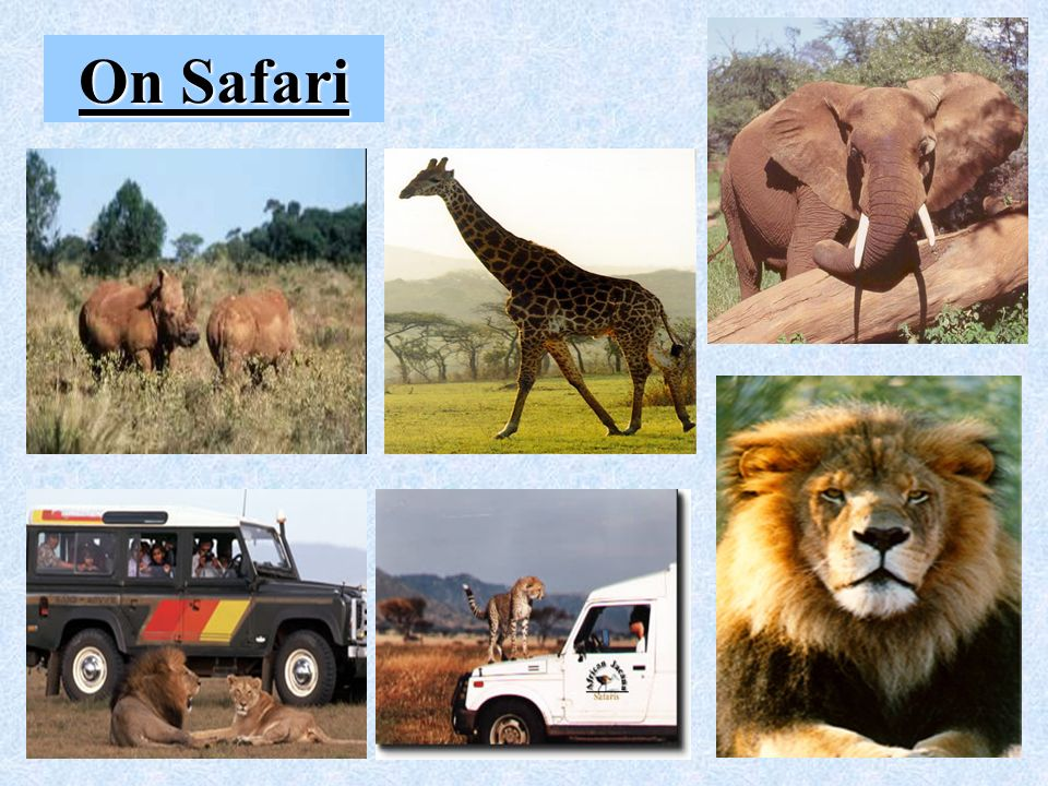 Tourism – Safari
