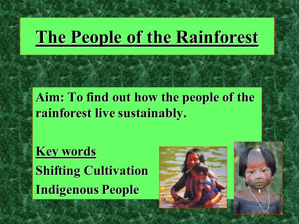 The People of the Rainforest Aim: To find out how the people of the rainforest live sustainably. Key words Shifting Cultivation Indigenous People