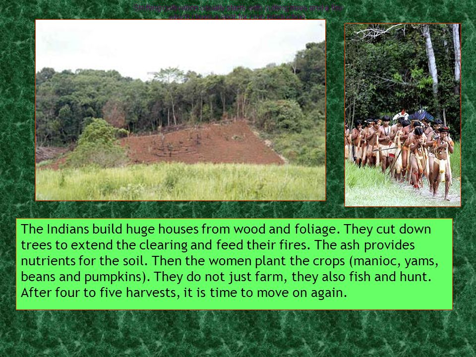 The Indians build huge houses from wood and foliage.