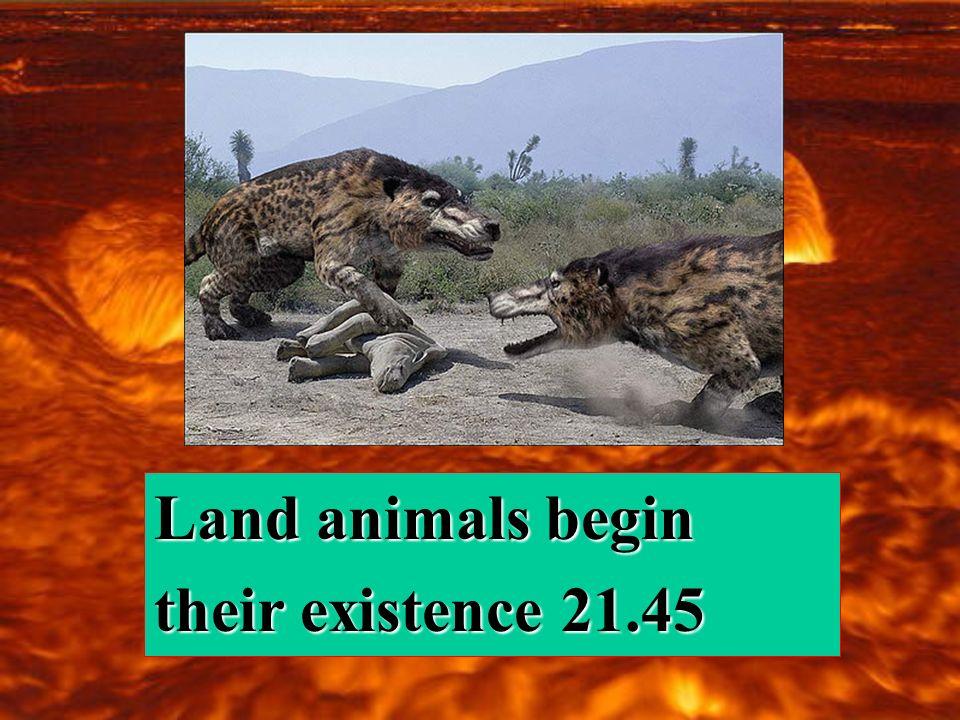 Land animals begin their existence 21.45