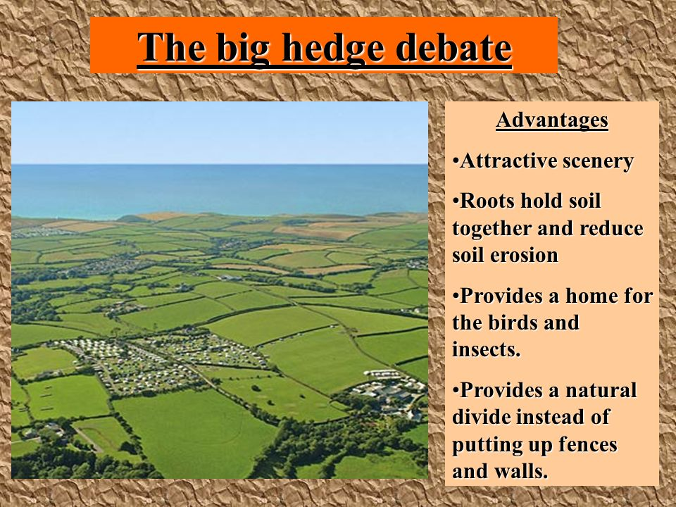The big hedge debate Advantages Attractive sceneryAttractive scenery Roots hold soil together and reduce soil erosionRoots hold soil together and reduce soil erosion Provides a home for the birds and insects.Provides a home for the birds and insects.