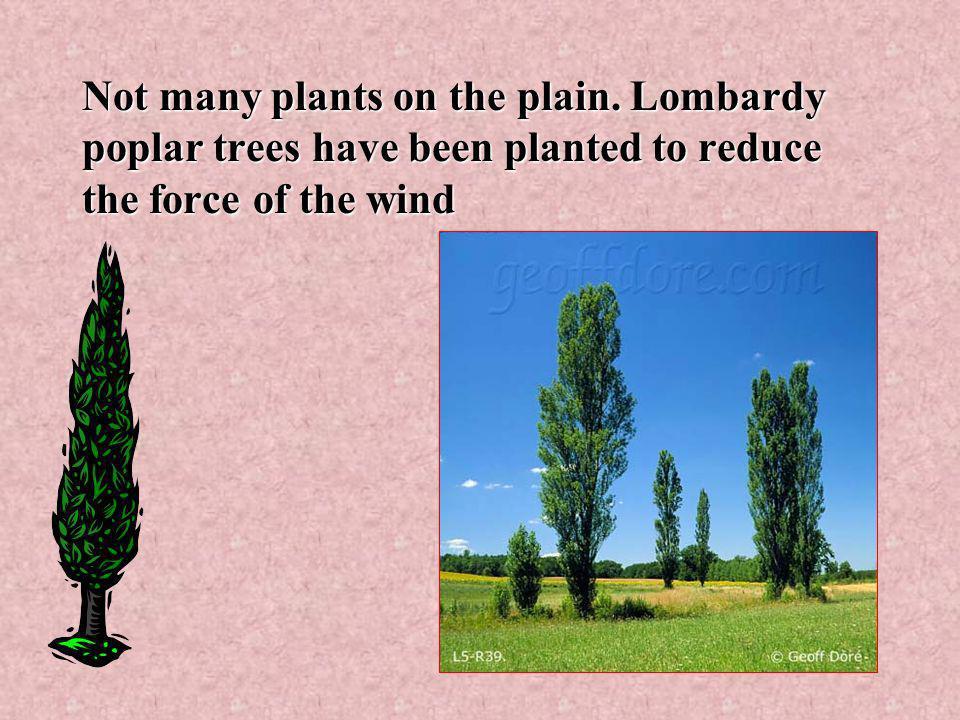 Not many plants on the plain.