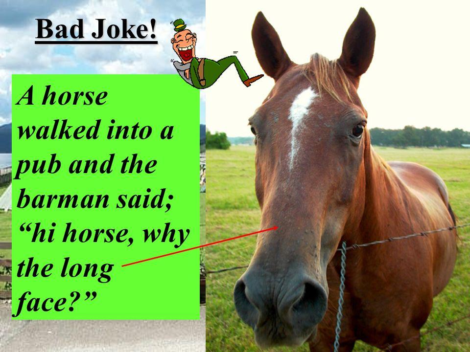 Bad Joke! A horse walked into a pub and the barman said; hi horse, why the long face?
