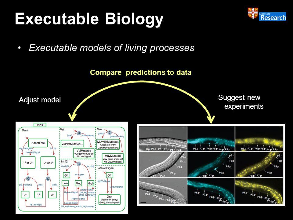 Executable Biology Executable models of living processes Compare predictions to data Suggest new experiments Adjust model