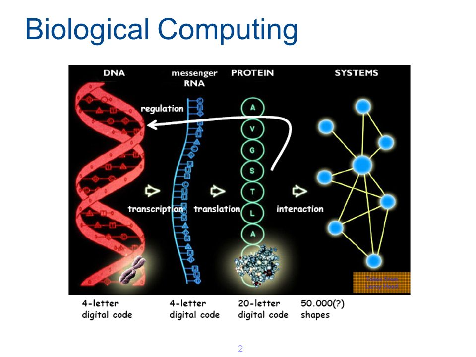 Biological Computing 2