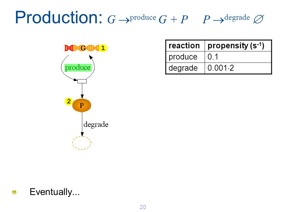 Eventually... Production: G produce G + P P degrade 20 2 1 reactionpropensity (s -1 ) produce0.1 degrade 0.001 2