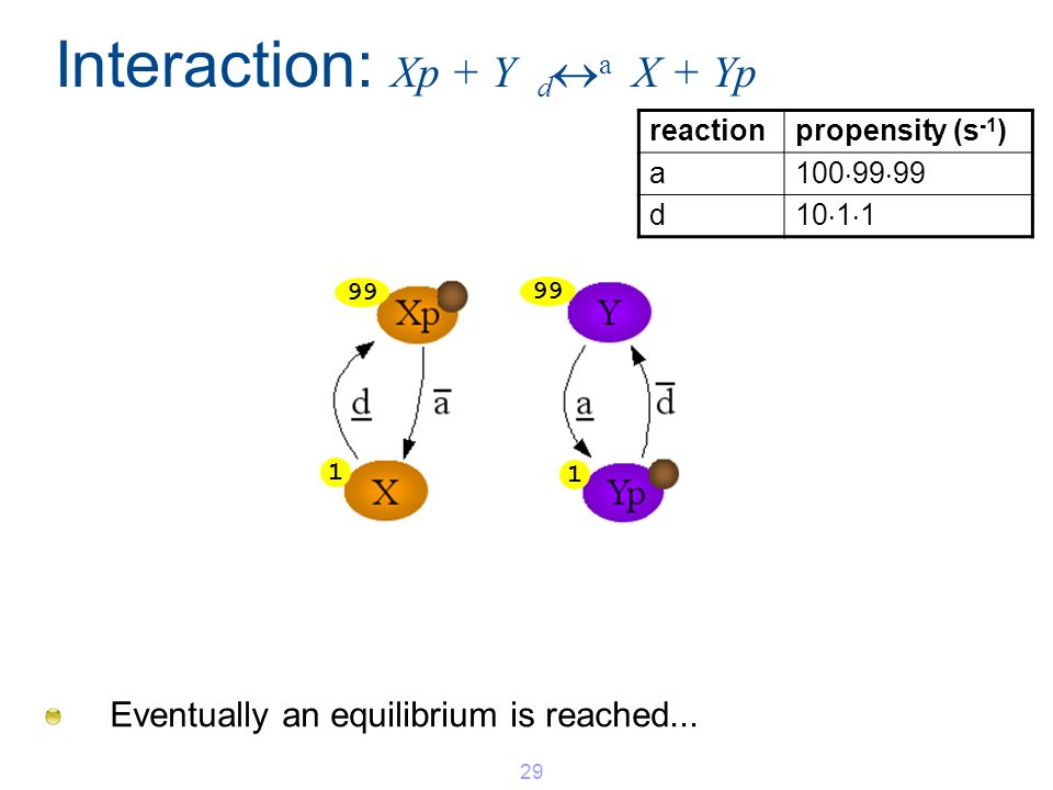 Interaction: Xp + Y d a X + Yp Eventually an equilibrium is reached... 29 1 1 99 reactionpropensity (s -1 ) a 100 99 99 d 10 1 1