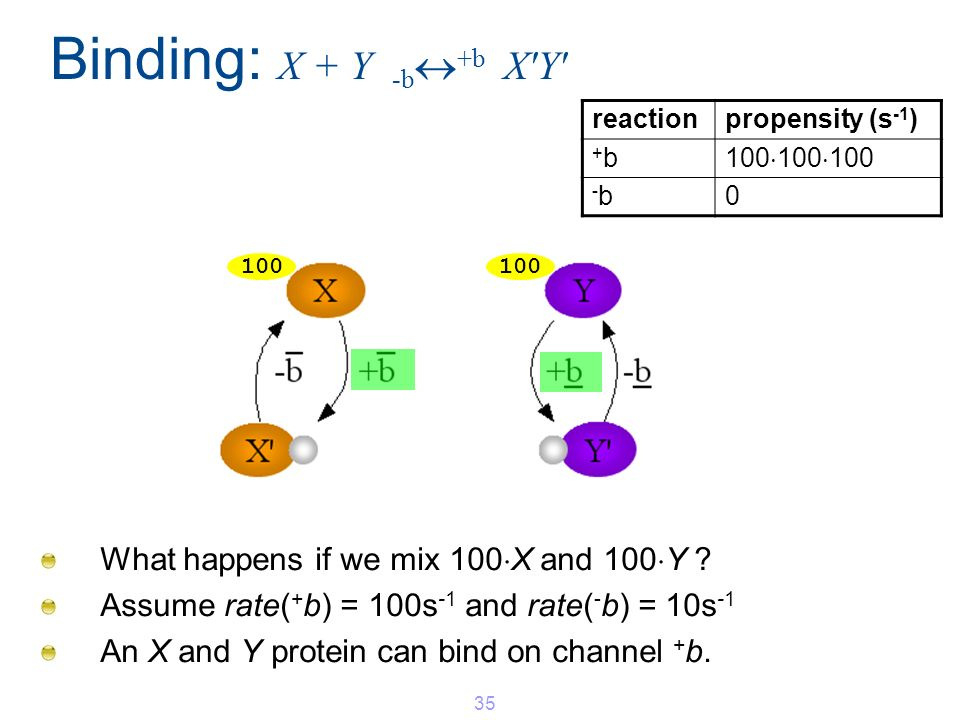 Binding: X + Y -b +b X'Y' What happens if we mix 100 X and 100 Y ? Assume rate( + b) = 100s -1 and rate( - b) = 10s -1 An X and Y protein can bind on