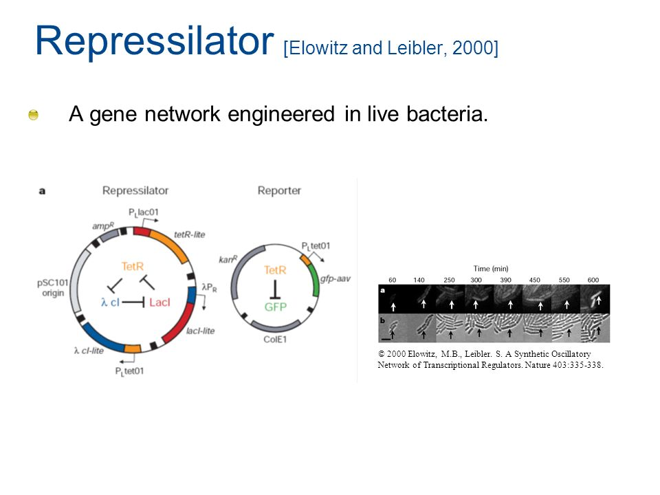 Repressilator [Elowitz and Leibler, 2000] A gene network engineered in live bacteria. © 2000 Elowitz, M.B., Leibler. S. A Synthetic Oscillatory Networ