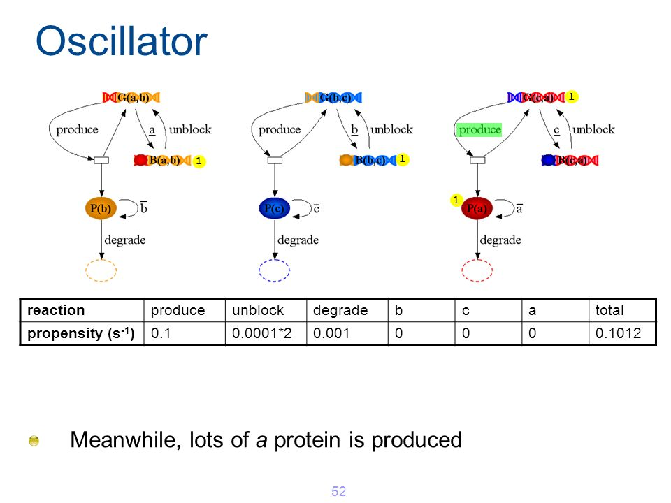 Oscillator Meanwhile, lots of a protein is produced 52 1 1 1 1 reactionproduceunblockdegradebcatotal propensity (s -1 )0.10.0001*20.0010000.1012