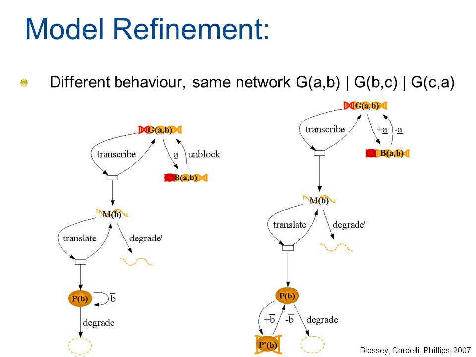 Model Refinement: Different behaviour, same network G(a,b) | G(b,c) | G(c,a) Blossey, Cardelli, Phillips, 2007