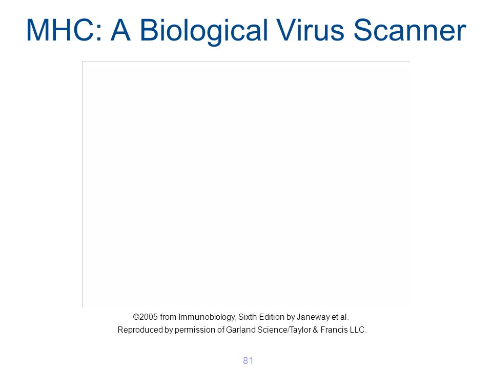 MHC: A Biological Virus Scanner 81 ©2005 from Immunobiology, Sixth Edition by Janeway et al. Reproduced by permission of Garland Science/Taylor & Fran