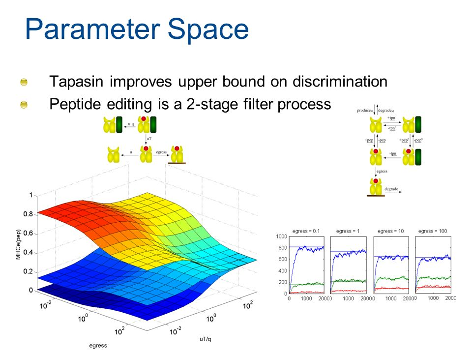 Parameter Space Tapasin improves upper bound on discrimination Peptide editing is a 2-stage filter process