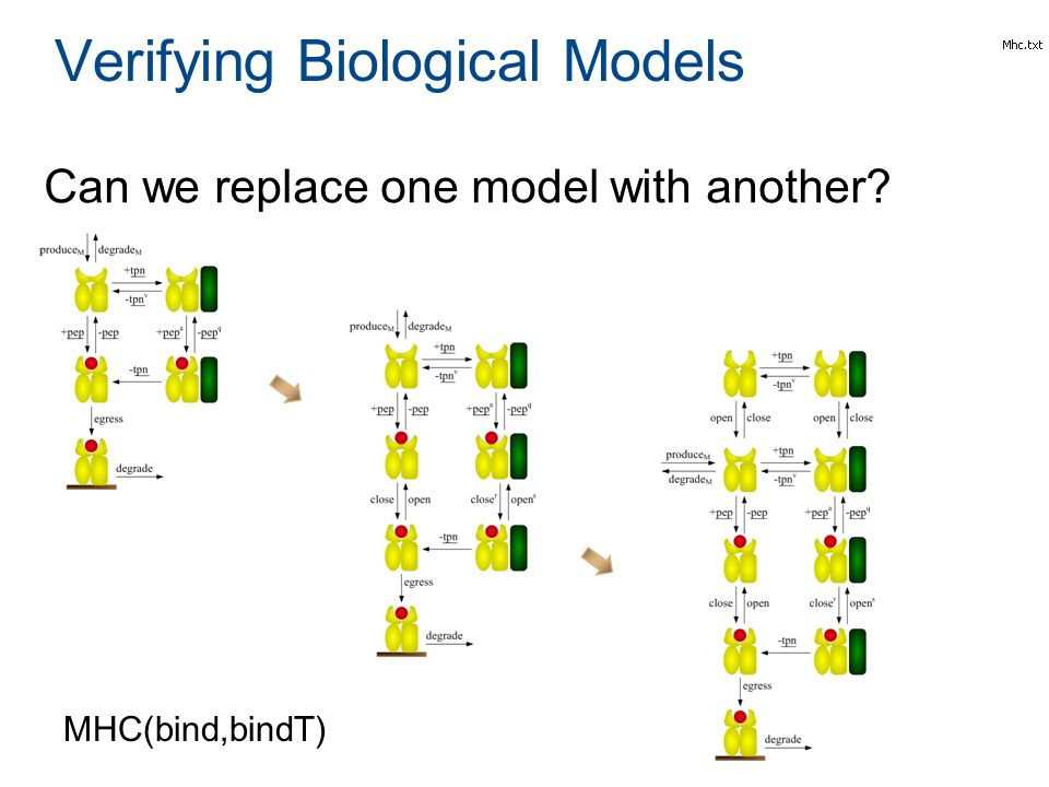 Can we replace one model with another? Verifying Biological Models MHC(bind,bindT)