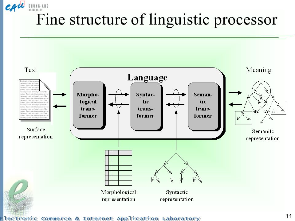 11 Fine structure of linguistic processor
