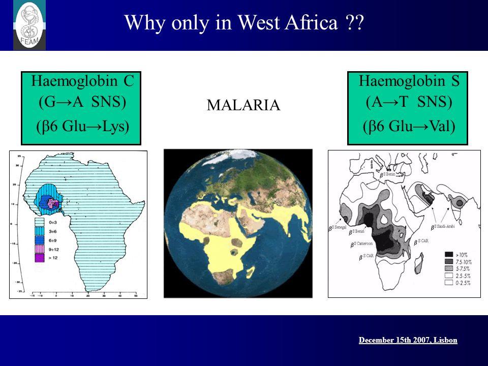 December 15th 2007, Lisbon Lisbon Conference, 15 December 2007 Why only in West Africa ?? Haemoglobin C (GA SNS) (β6 GluLys) MALARIA Haemoglobin S (AT