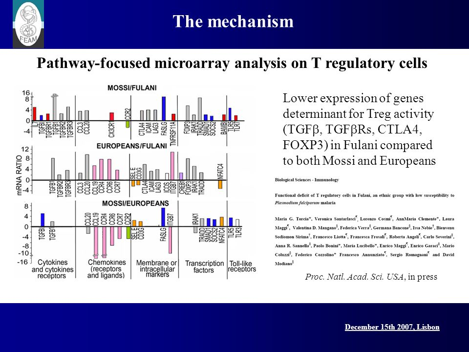 December 15th 2007, Lisbon Lisbon Conference, 15 December 2007 The mechanism Lower expression of genes determinant for Treg activity (TGF, TGF Rs, CTL