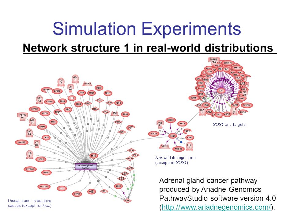 Simulation Experiments Network structure 1 in real-world distributions Adrenal gland cancer pathway produced by Ariadne Genomics PathwayStudio softwar