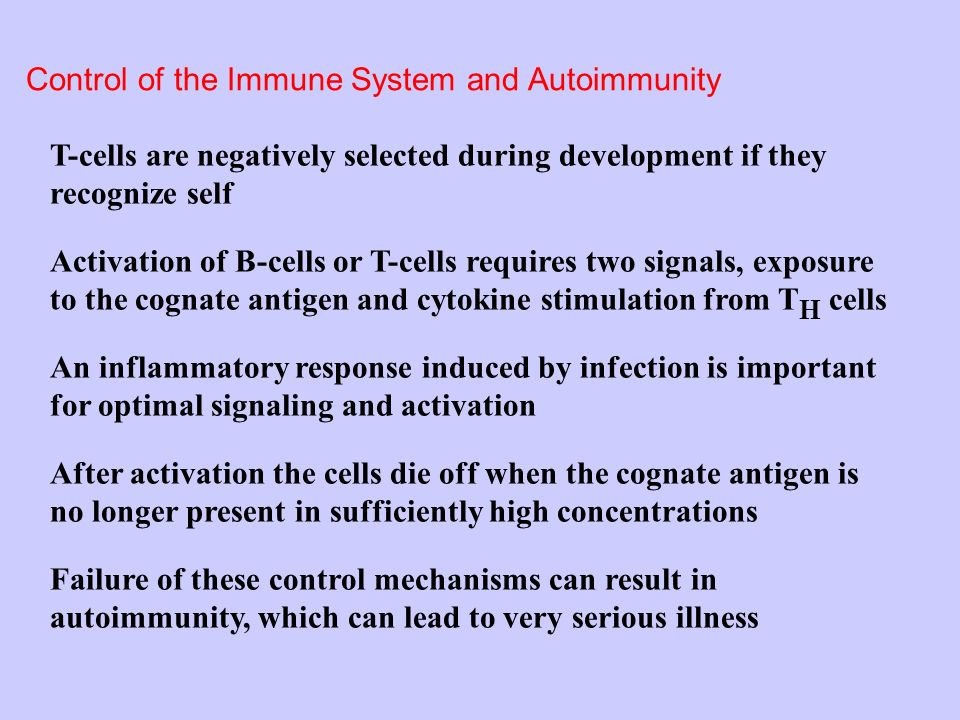 Control of the Immune System and Autoimmunity T-cells are negatively selected during development if they recognize self Activation of B-cells or T-cells requires two signals, exposure to the cognate antigen and cytokine stimulation from T H cells After activation the cells die off when the cognate antigen is no longer present in sufficiently high concentrations Failure of these control mechanisms can result in autoimmunity, which can lead to very serious illness An inflammatory response induced by infection is important for optimal signaling and activation