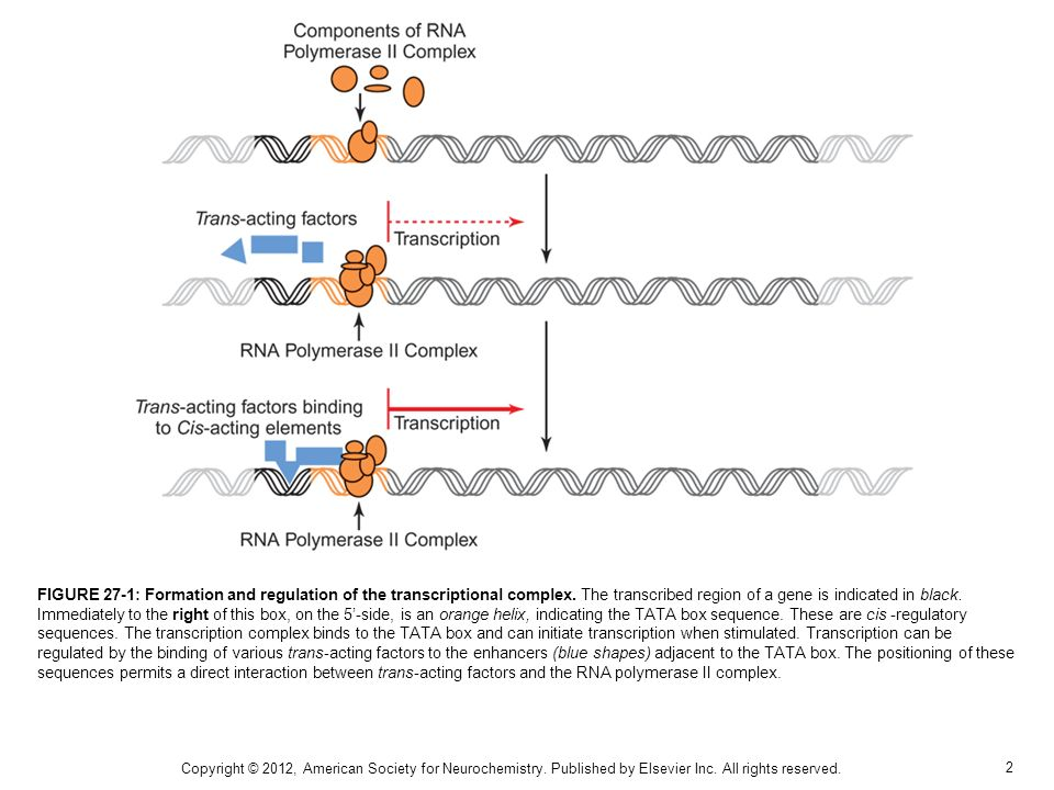 2 FIGURE 27-1: Formation and regulation of the transcriptional complex.
