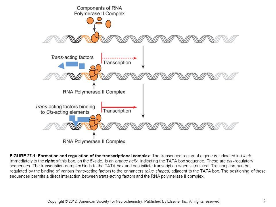 3 FIGURE 27-2: Gene expression as a biological amplifier.