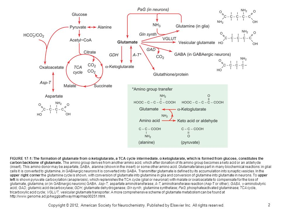 2 FIGURE 17-1: The formation of glutamate from α-ketoglutarate, a TCA cycle intermediate.