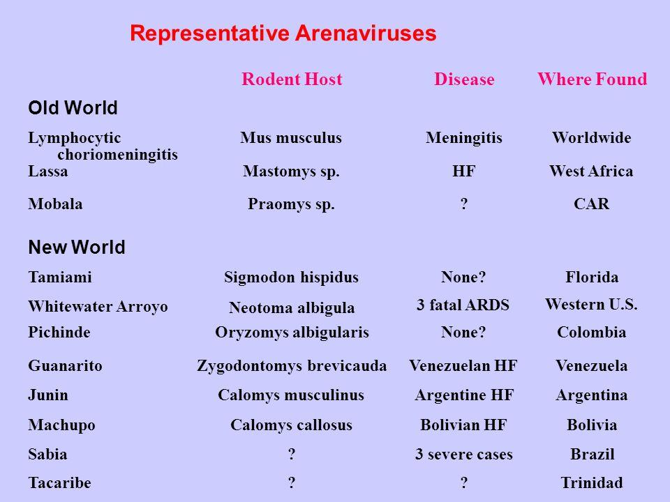 Representative Arenaviruses Old World Lymphocytic choriomeningitis Lassa Mobala New World Tamiami Whitewater Arroyo Pichinde Guanarito Junin Machupo S