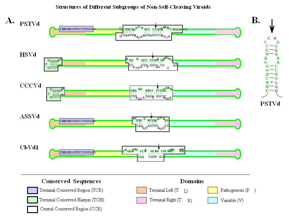 Human Prion Diseases Although all human TSEs are characterized by changes in the metabolism of the prion protein, the symptoms differ, in part because different areas of the brain are affected.