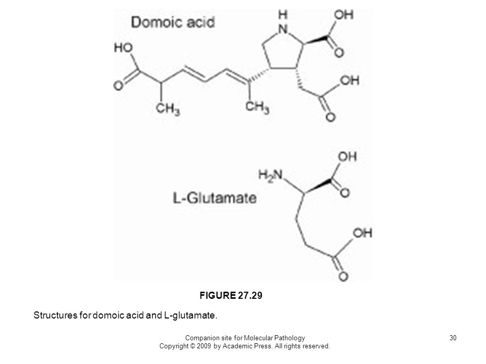 Companion site for Molecular Pathology Copyright © 2009 by Academic Press. All rights reserved. 30 Structures for domoic acid and L-glutamate. FIGURE