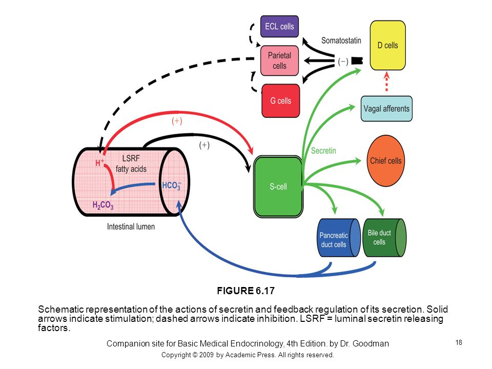 Companion site for Basic Medical Endocrinology, 4th Edition. by Dr. Goodman Copyright © 2009 by Academic Press. All rights reserved. 18 Schematic repr