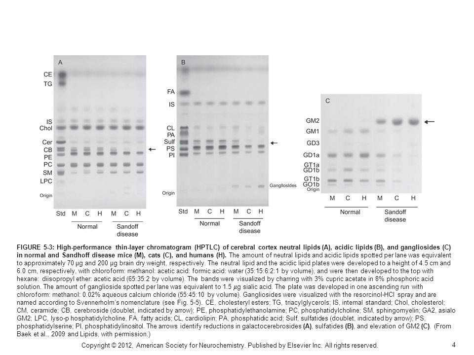 4 FIGURE 5-3: High-performance thin-layer chromatogram (HPTLC) of cerebral cortex neutral lipids (A), acidic lipids (B), and gangliosides (C) in norma