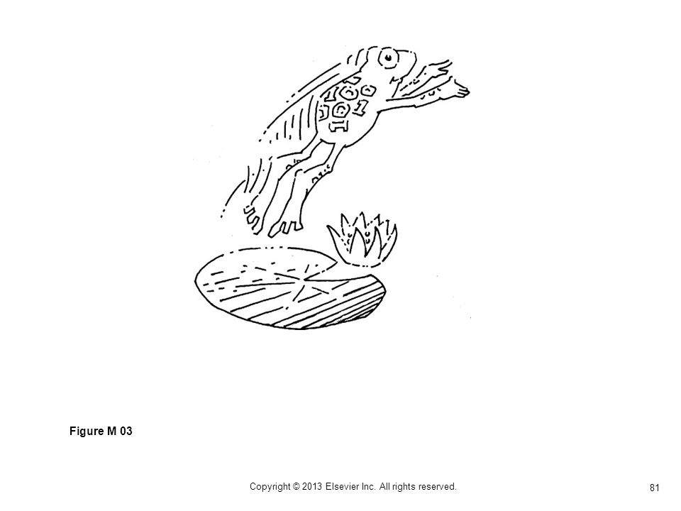 81 Copyright © 2013 Elsevier Inc. All rights reserved. Figure M 03