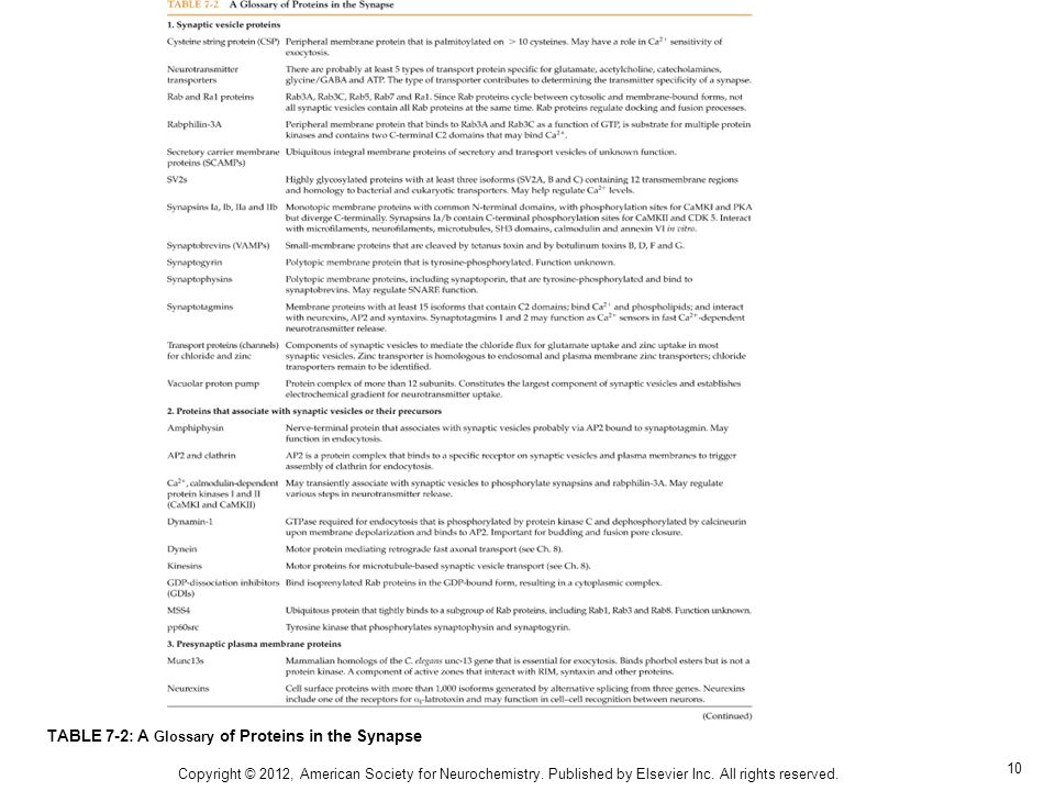 10 TABLE 7-2: A Glossary of Proteins in the Synapse Copyright © 2012, American Society for Neurochemistry. Published by Elsevier Inc. All rights reser
