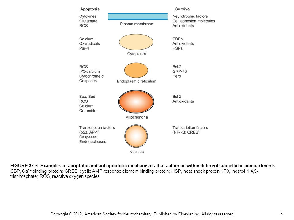 8 FIGURE 37-6: Examples of apoptotic and antiapoptotic mechanisms that act on or within different subcellular compartments.
