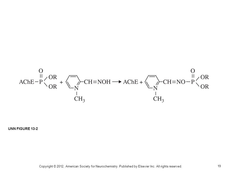 19 Copyright © 2012, American Society for Neurochemistry. Published by Elsevier Inc. All rights reserved. UNN FIGURE 13-2