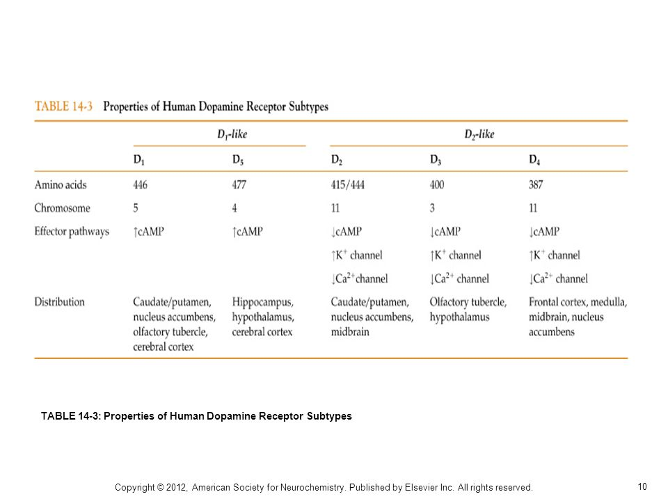 10 TABLE 14-3: Properties of Human Dopamine Receptor Subtypes Copyright © 2012, American Society for Neurochemistry.